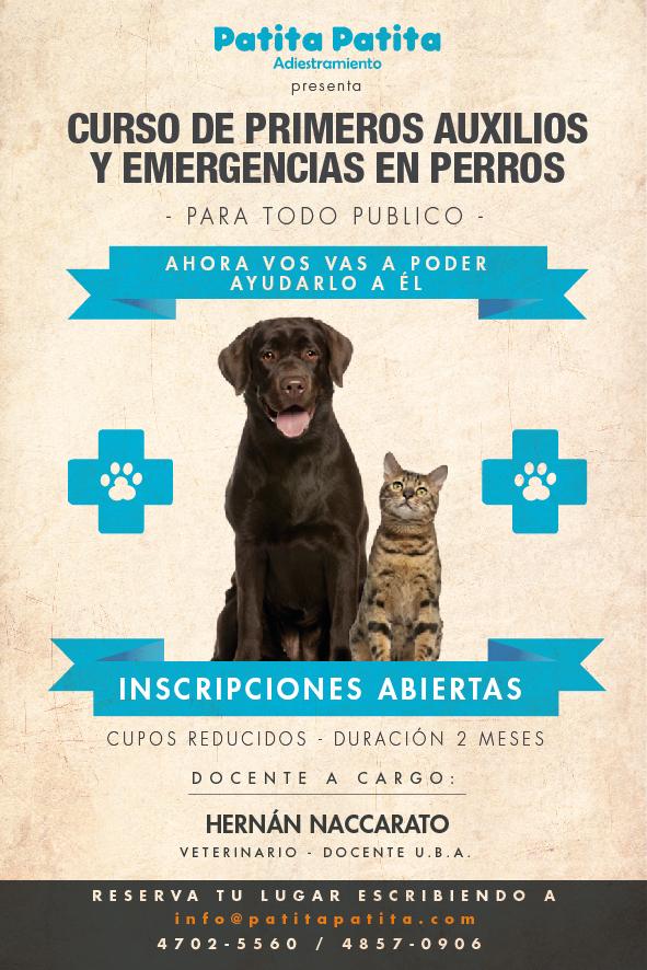 Curso PA Flyer nuevo2-01-01